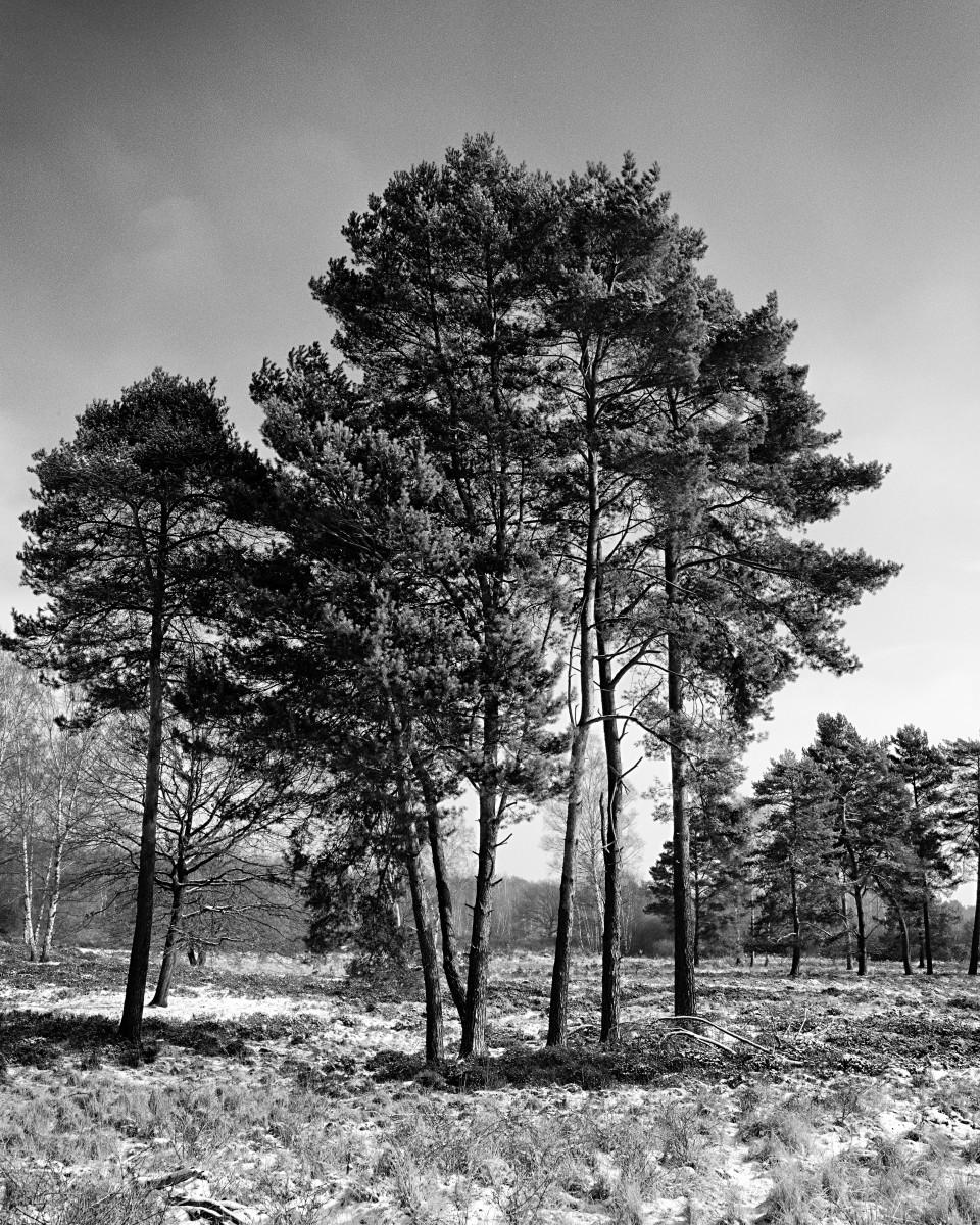 Dreier Im Wald